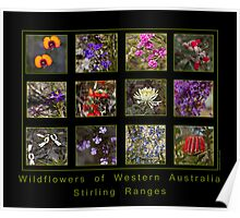 Wildflowers of WA - Stirling Ranges Poster