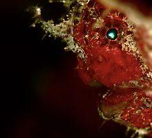 iridescent eye by Bo Mancao