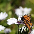 spring on the wing by Jan Stead JEMproductions