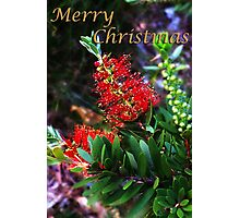 Merry Christmas Bottlebrush Card Photographic Print