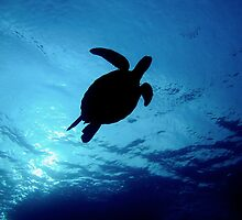 Turtle Take off by Bo Mancao
