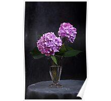Hortensia flowers in glass vase  Poster