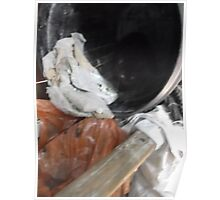 Cat inside of barrel (1 of 2) -(030912)- Digital photo Poster