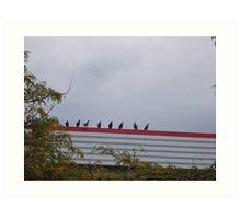 Pigeon Lineup Art Print