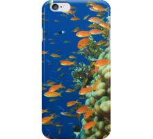 Reef Colours iPhone Case/Skin