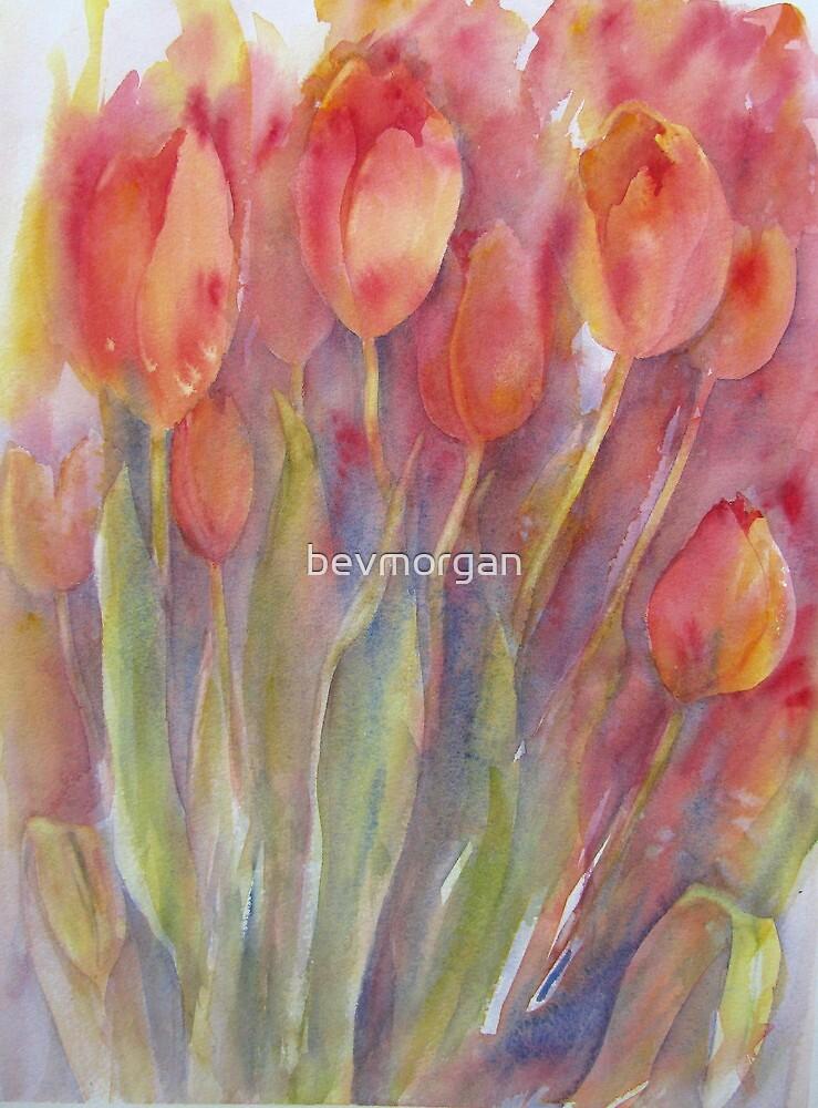Tulip Impressions by bevmorgan