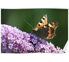 Perched Butterfly Poster
