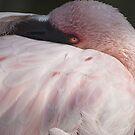 Pink Flamingo by Vac1