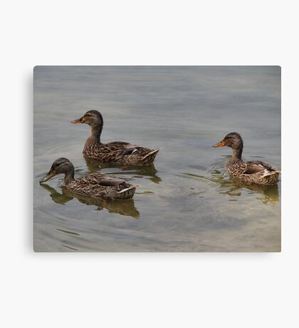 Just us three Canvas Print