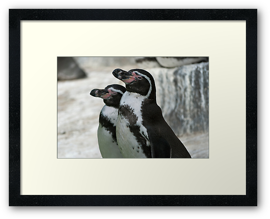 Humboldt Penguins by Vac1