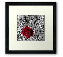 Selective colour flower Framed Print