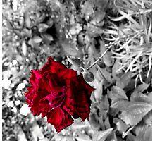 Selective colour flower Photographic Print
