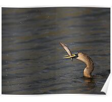 Anhingas Love Fishing Poster