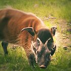 The Warthog (Lomography) by lomonomad