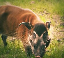 The Warthog (Lomography) by Joel Stone