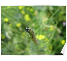Large White Caterpillar Poster