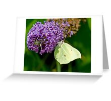 Brimstone Butterfly (Female) Greeting Card