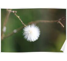 White Fluff Poster