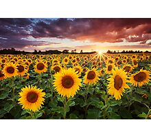 Sunshine Photographic Print
