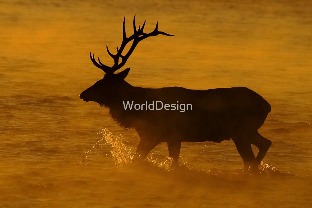A Steamy Sunrise by William C. Gladish, World Design