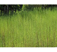 Green Grass 1 Photographic Print