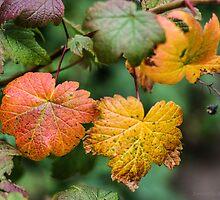 some autumn by JorunnSjofn Gudlaugsdottir