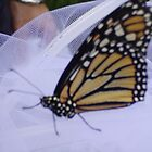 Monarch Butterfly on Tulle by aweddingtheme