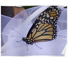 Monarch Butterfly on Tulle Poster