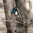 Butterfly Blue by Christine Lake