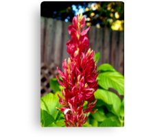 Red flower spike Canvas Print