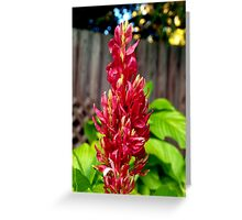 Red flower spike Greeting Card