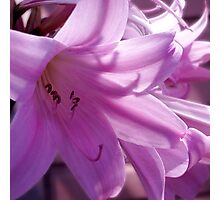 Lilies Photographic Print