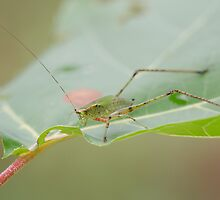 Grasshopper! by vasu