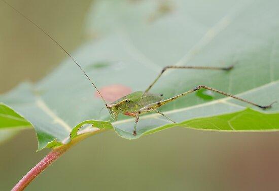 Grasshopper! by vasu