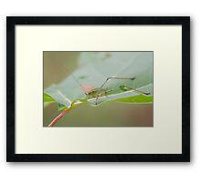 Grasshopper! Framed Print