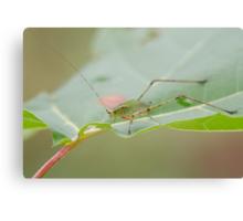 Grasshopper! Canvas Print