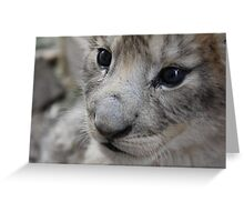 cute baby lion cub Greeting Card