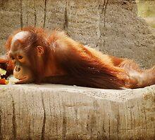 Orangutan No. 2 by photecstasy