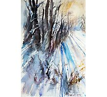 Winter Sun at the Forest Photographic Print