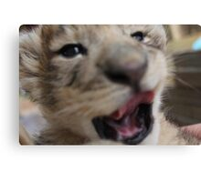 baby lion cub yawning Canvas Print