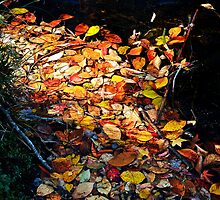 Autumn Leaves by DavidsArt