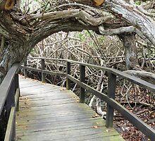 Mangrove walkway. by Anne Scantlebury