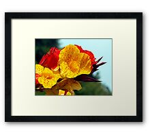 Colourful Canna Lily Framed Print
