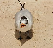 shouting seagull in Mexico by holljw