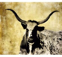 Horns Photographic Print