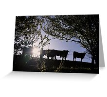 Angus heifers in the South Gippsland hills, 2012 Greeting Card