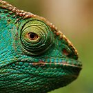 karma chameleon? by mellychan