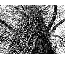 Twisted Photographic Print