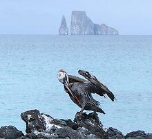 Brown pelican 1. by Anne Scantlebury