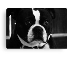 Regal Boston  Canvas Print